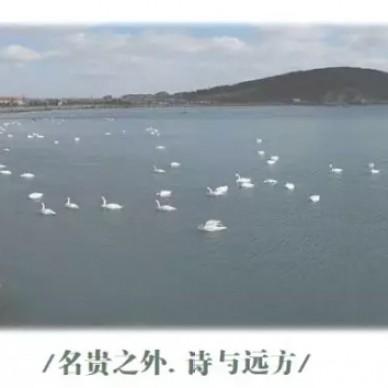 """威海蓝城春风海岸样板间""""诗与远方""""_3815096"""