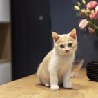 猫日子_3899930